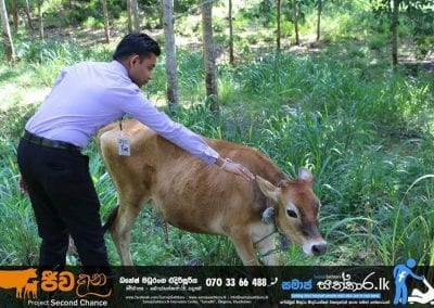 cow3 1 1