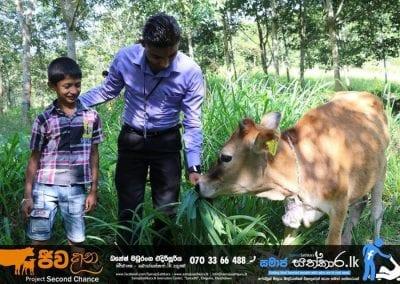 cow3 6 1