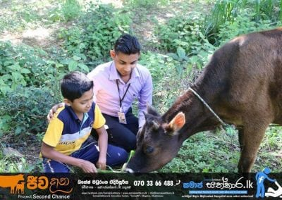 cow4 2