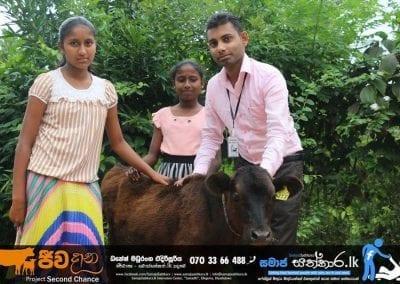 cow2 7