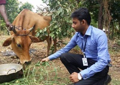 cow12 5