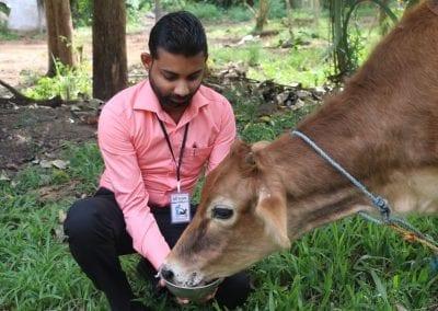 cowfeed1 20