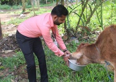 cowfeed1 4