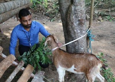 goat2 1
