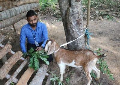 goat2 12