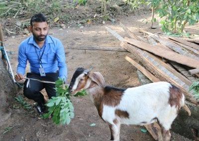 goat2 22
