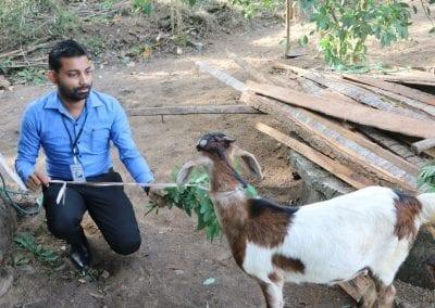 goat2 24