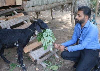 goat2 29