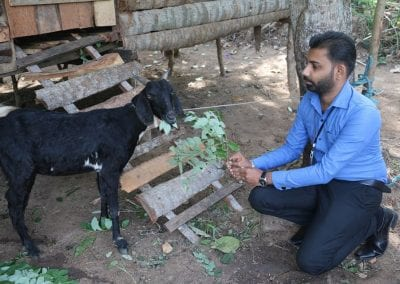 goat2 4