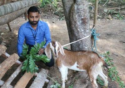 goat2 8